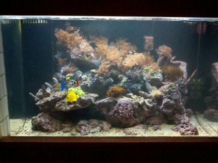 50g Reef